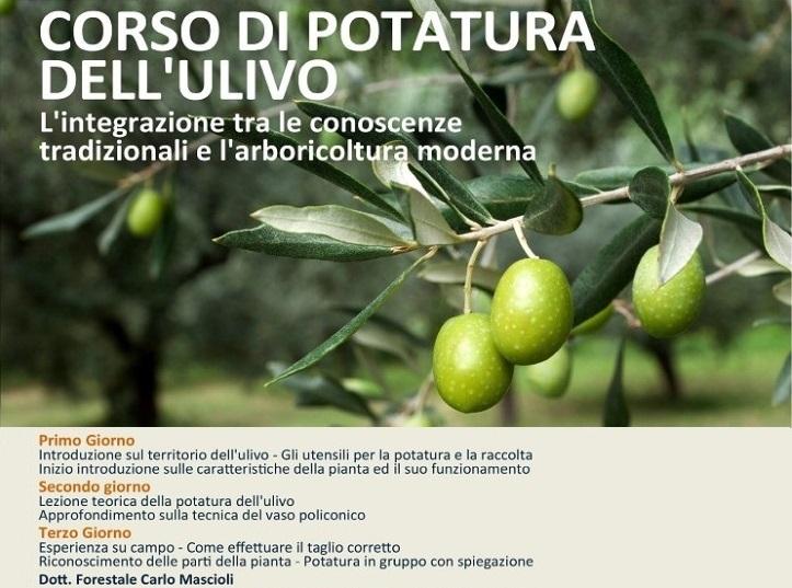 locandina_ulivo_03-web1-724x1024
