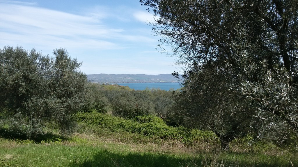 ulivi-lago